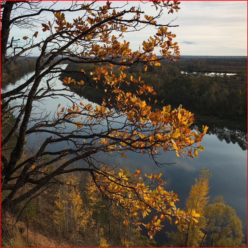 Осень красивая  (гей блюсик 18379)