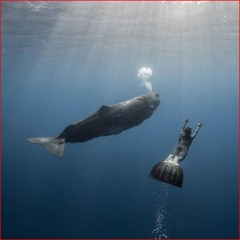 Заплыв с кашалотом  (гей блюсик 18395)