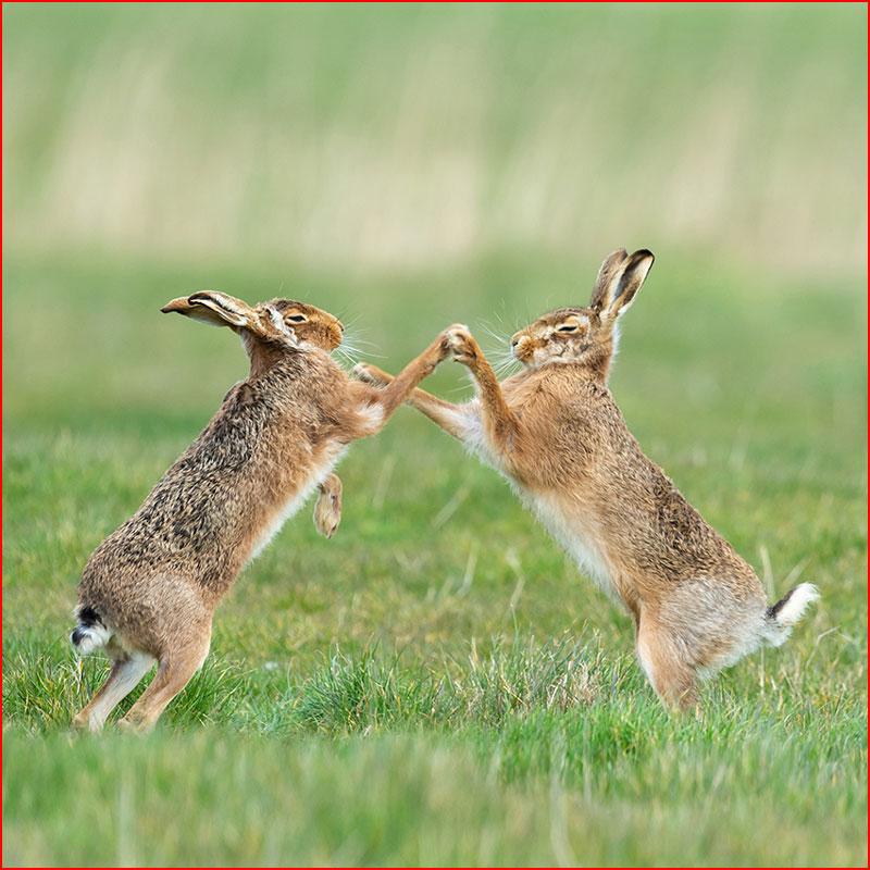 Самые смешные фото дикой природы  (гей блюсик 18403)