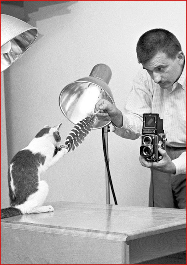 Кошки в объективе Уолтера Чандоха  (гей блюсик 18415)