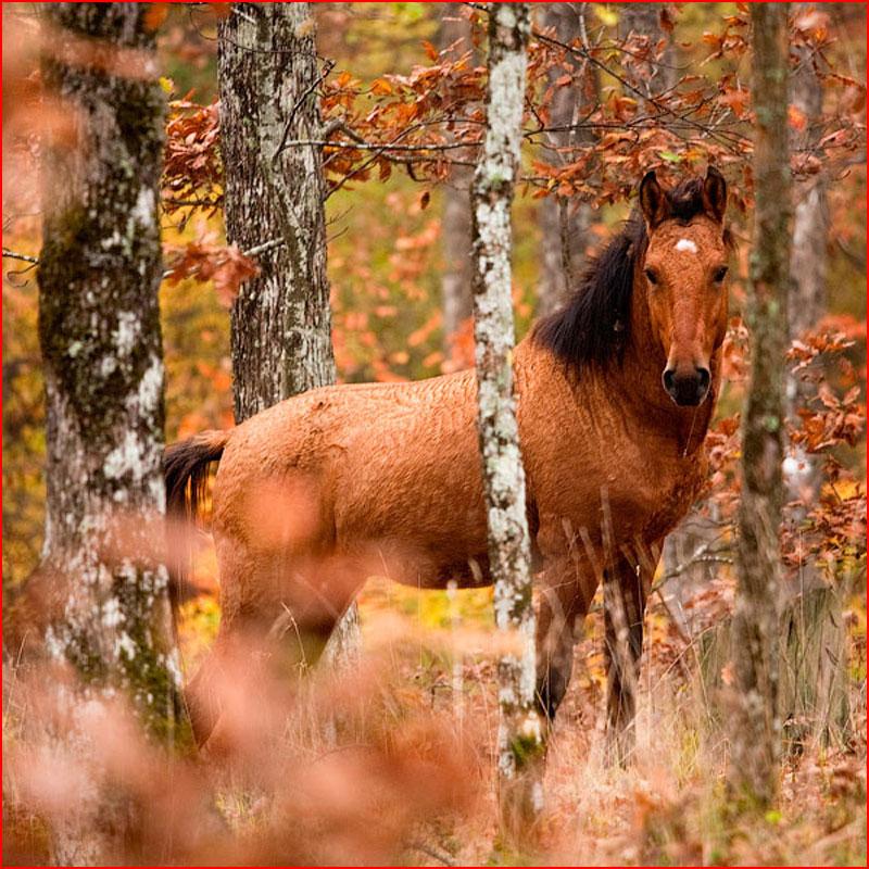 Животные тоже любят осень  (гей блюсик 18451)
