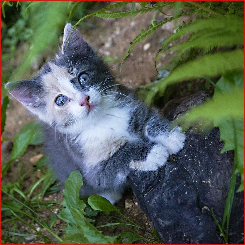 Из жизни котят  (гей блюсик 18475)