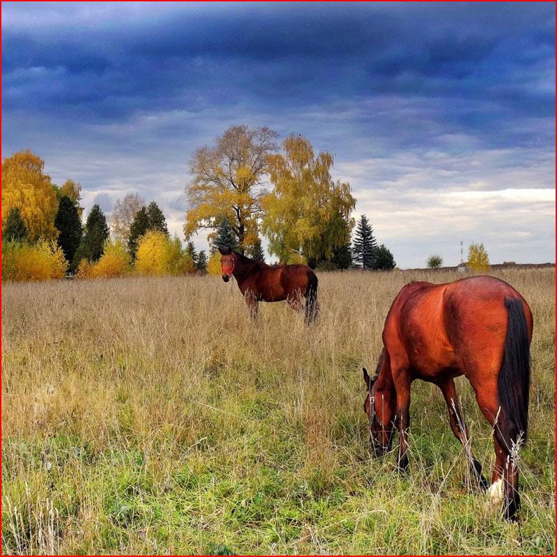 Октябрь. Фотозарисовка  (гей блюсик 18511)