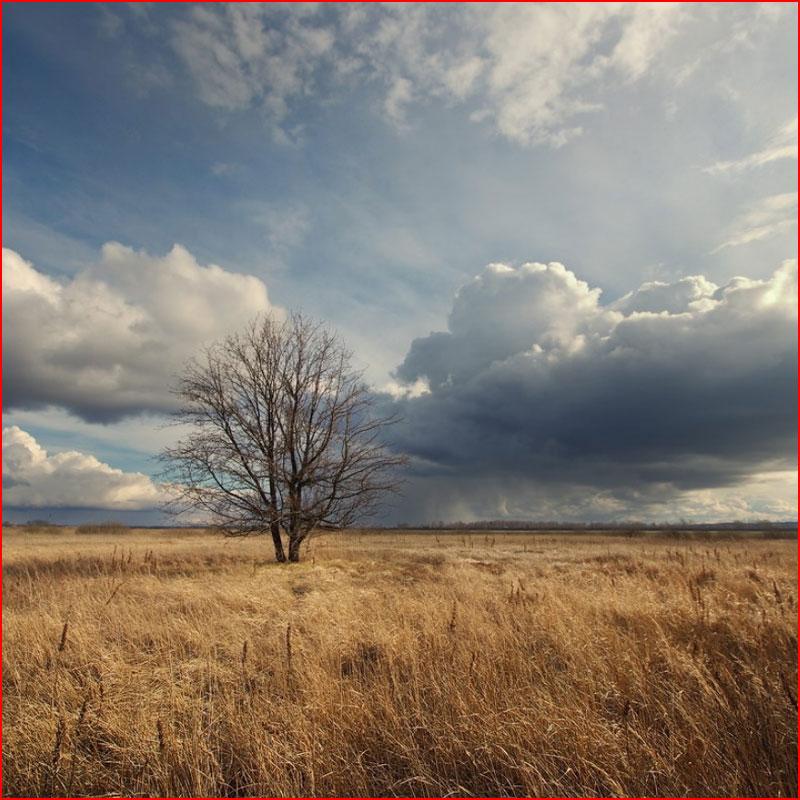 Ноябрь, грустная пора. Фотозарисовка  (гей блюсик 18627)