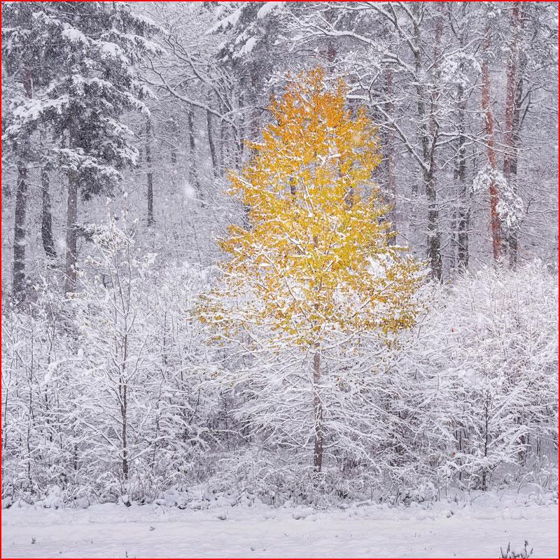 Ноябрьская фотозарисовка  (гей блюсик 18715)