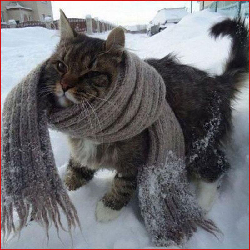 Холодно, однако!  (гей блюсик 18723)