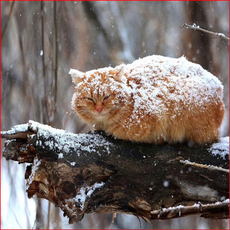 Холодно, однако!