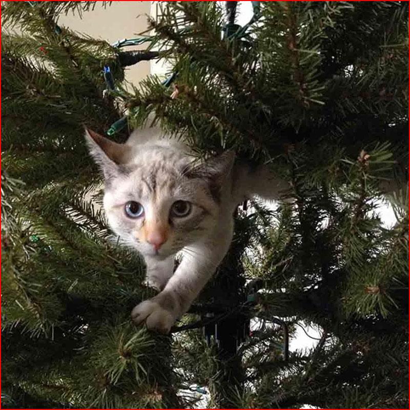 Как кошки встречали Новый год