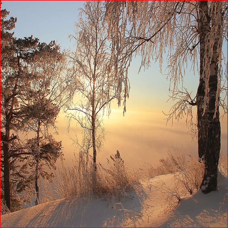 Февраль. Фотозарисовка  (гей блюсик 19007)