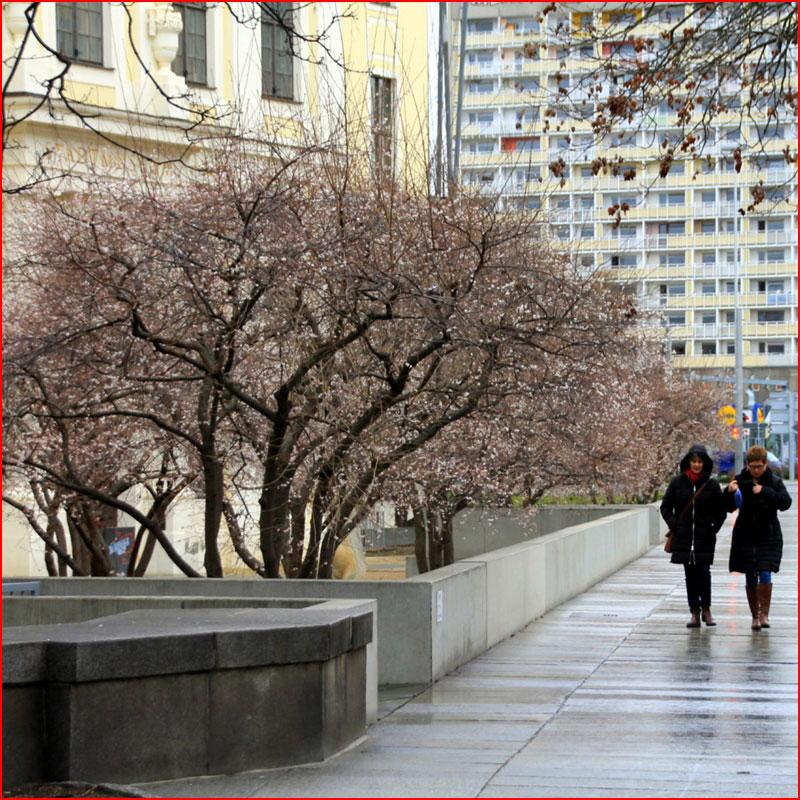 То ли ещё зима, то ли уже весна…  (гей блюсик 19011)