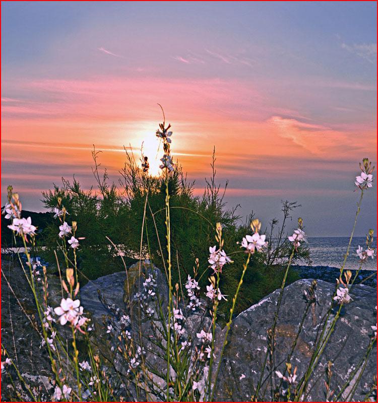 В мире цветов  (гей блюсик 19143)