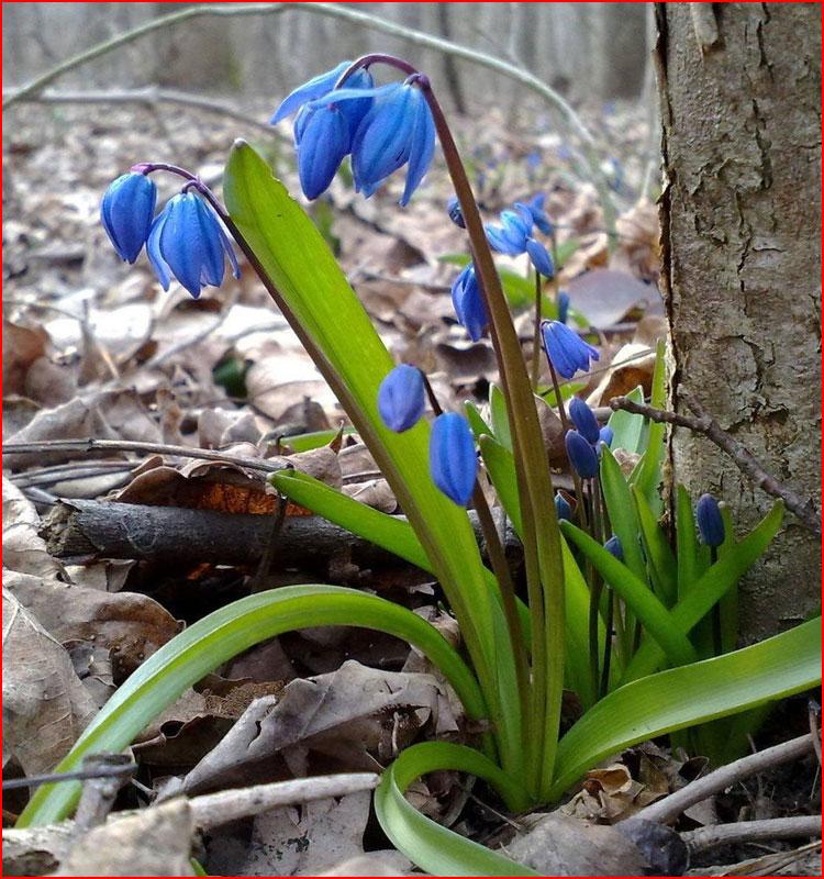 Начало весны  (гей блюсик 19171)