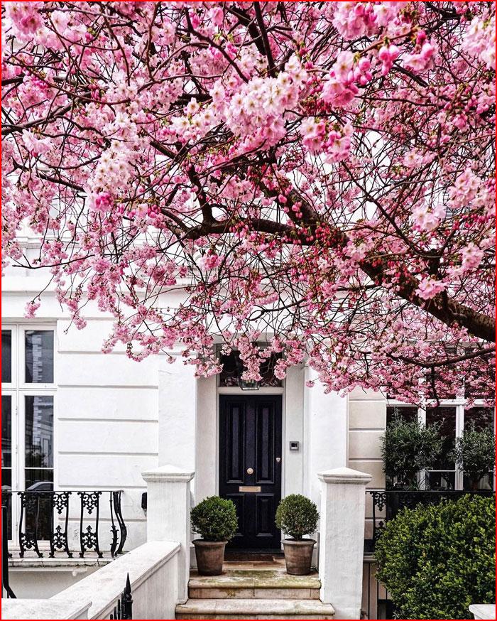 Лондон в цвету  (гей блюсик 19331)