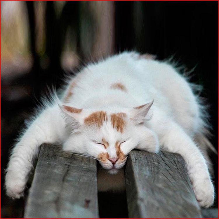 В сонном царстве кошек