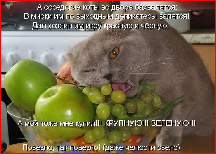 Котоматрицы  (гей блюсик 19623)
