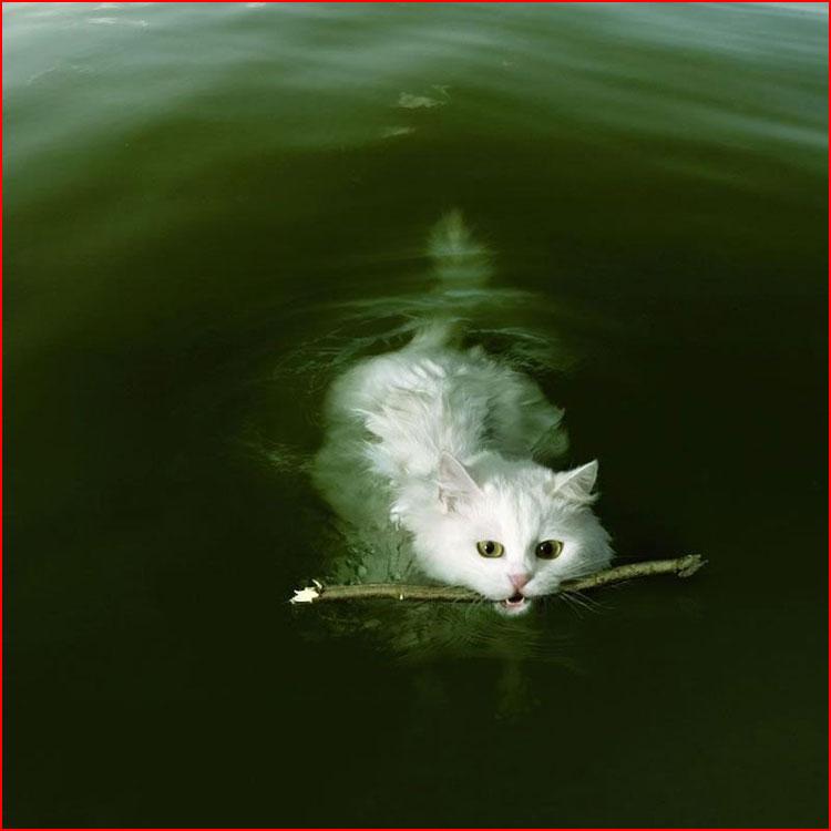 Жаркое лето кошек и собак  (гей блюсик 19675)