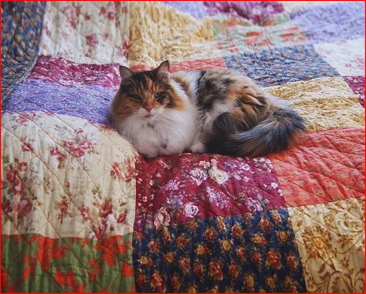 Деревенские кошки. Фотозарисовка  (гей блюсик 19903)
