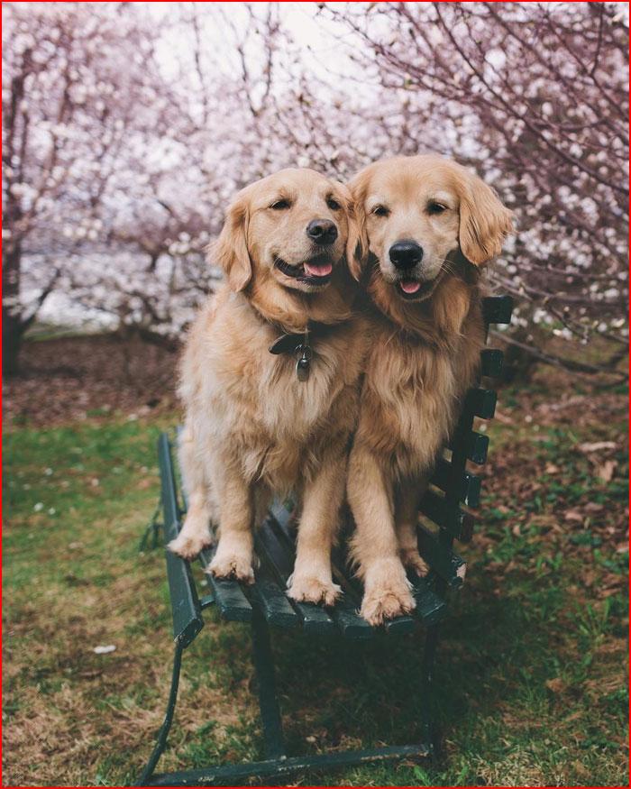 Фотопутешествие с Лиззи и Элли  (гей блюсик 19927)