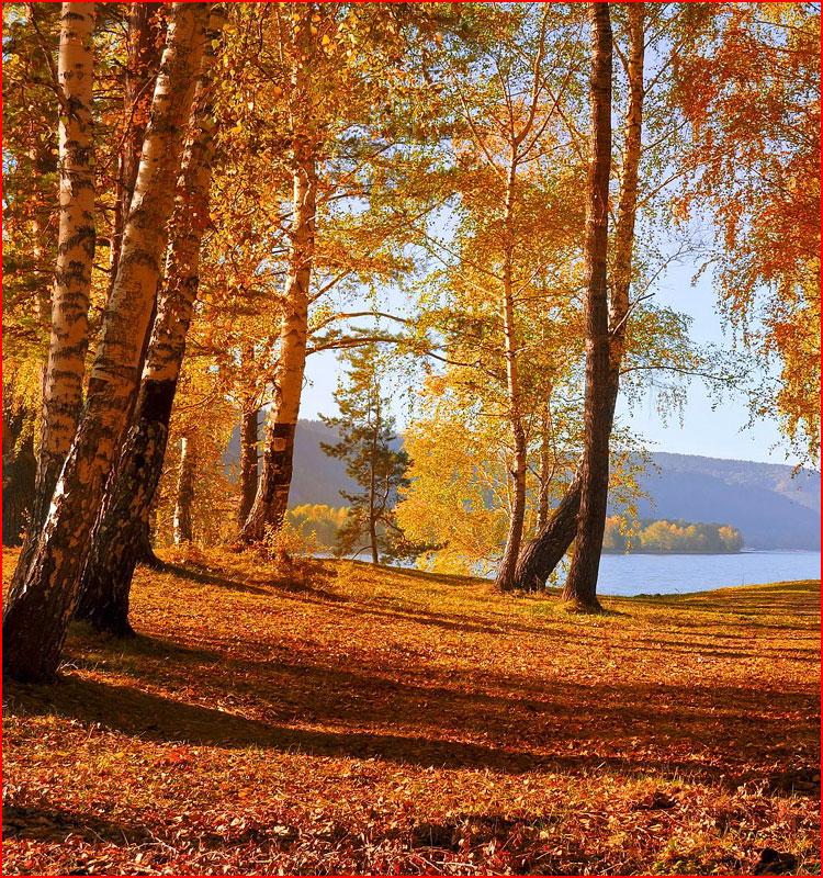 Осенняя фотозарисовка  (гей блюсик 19935)
