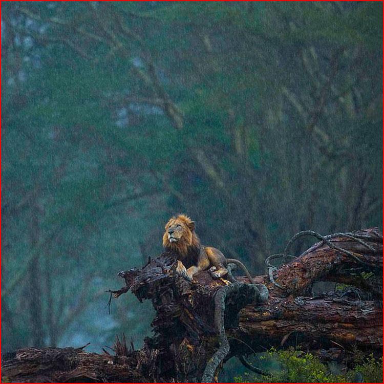 Фотографии конкурсантов Nature Photographer of The Year 2020  (гей блюсик 20251)