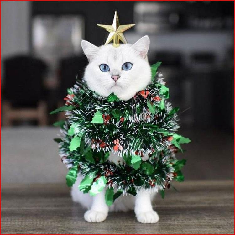 Как кошки Новый год встречали  (гей блюсик 20315)