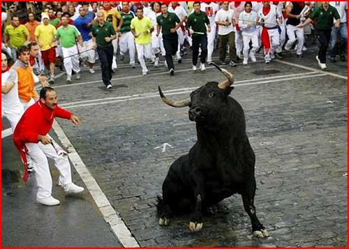 Бег с быками  (гей блюсик 2115)