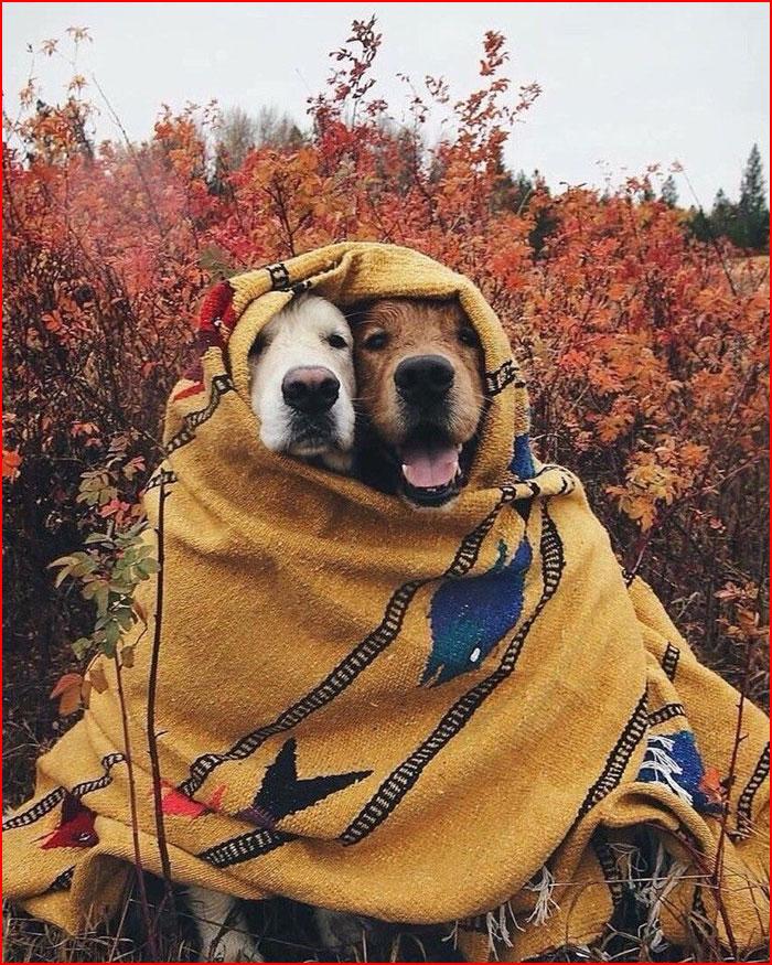 Питомцы осень встречают