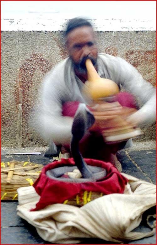 Заклинатели змей  (гей блюсик 2275)