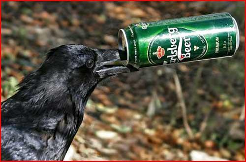 Любительница пива  (гей блюсик 256)