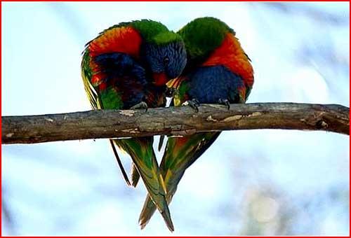 Звериная любовь  (гей блюсик 263)
