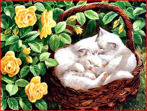 Рисованные кошки  (гей блюсик 2799)