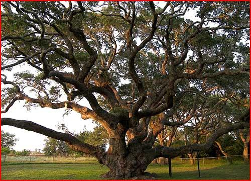 Необычные деревья  (гей блюсик 2823)