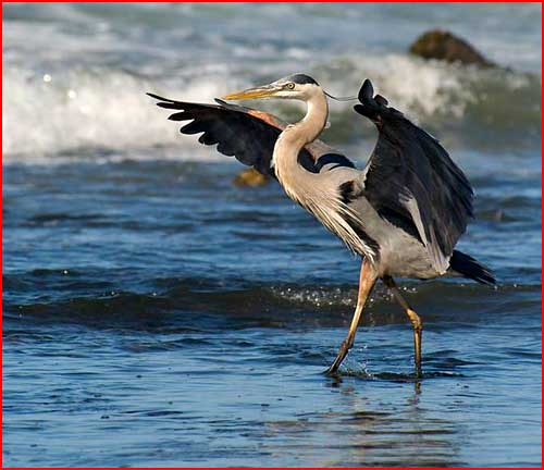 Птицы  (гей блюсик 2827)