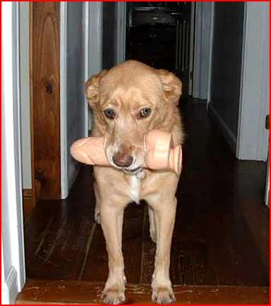 Собачья забава  (гей блюсик 3069)