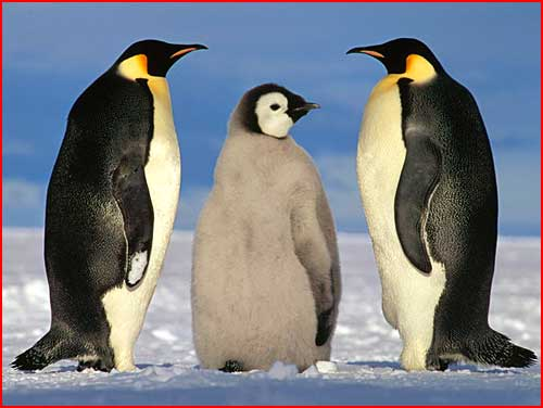 Животные зимой  (гей блюсик 4299)