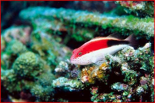 Подводный мир  (гей блюсик 499)
