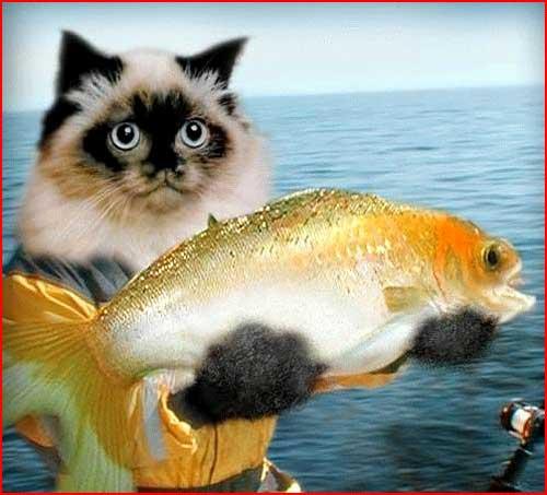 Золотую рыбку не хотите?  (гей блюсик 501)