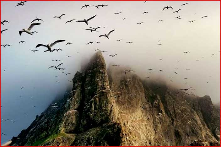 Природа Шотландии  (гей блюсик 5435)