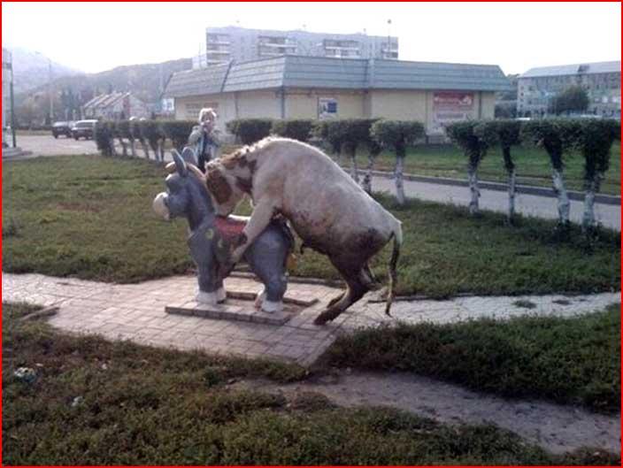 Забавные животные  (гей блюсик 6071)