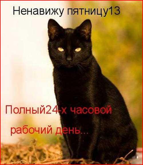 Из жизни кошек  (гей блюсик 6355)