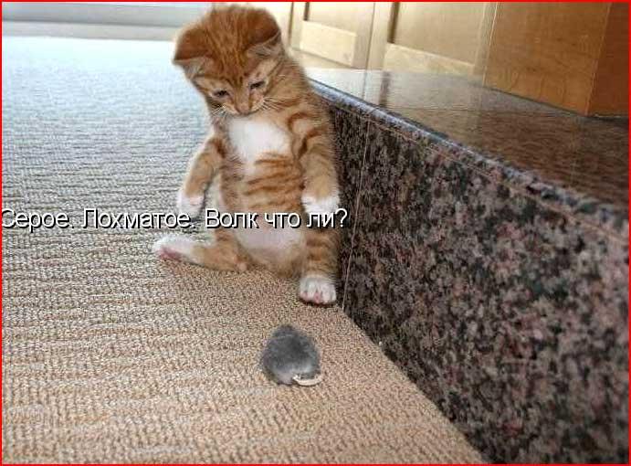 Из жизни кошек  (гей блюсик 6423)