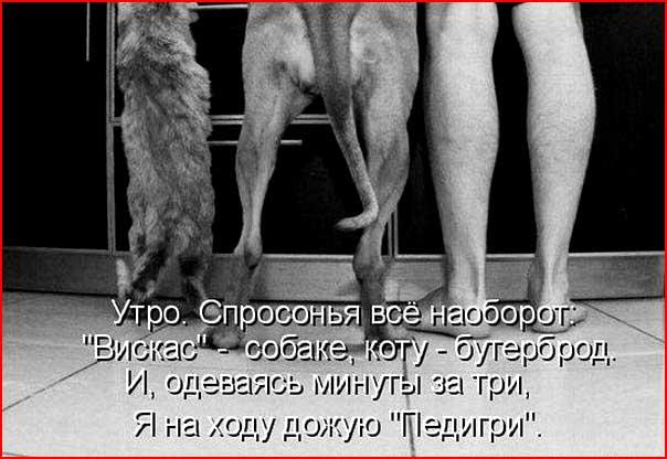 Если б животные говорили  (гей блюсик 6711)