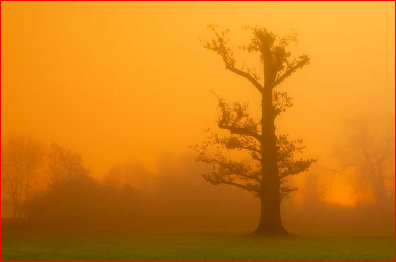 Деревья  (гей блюсик 7023)