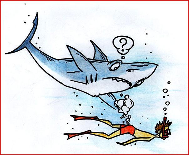 Озадаченная акула  (гей блюсик 7304)