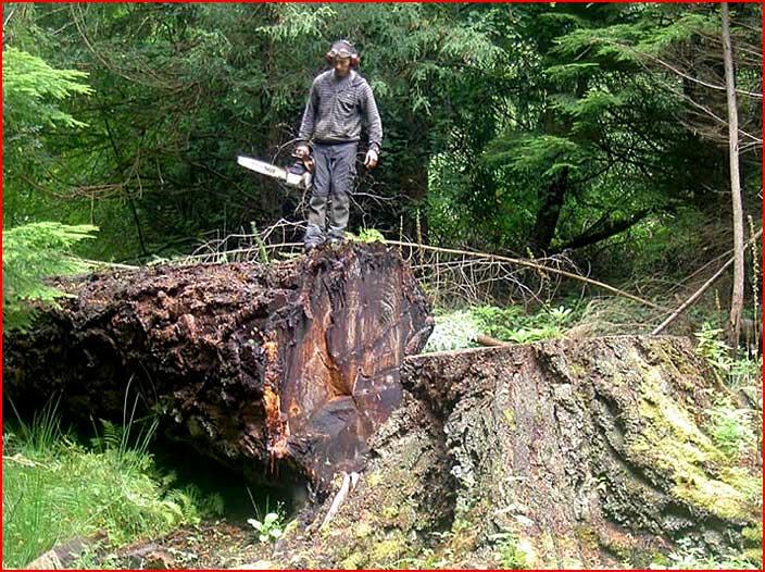 Вторая жизнь срубленных деревьев  (гей блюсик 7415)