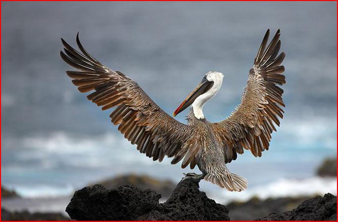 Удивительные фотографии птиц  (гей блюсик 7419)