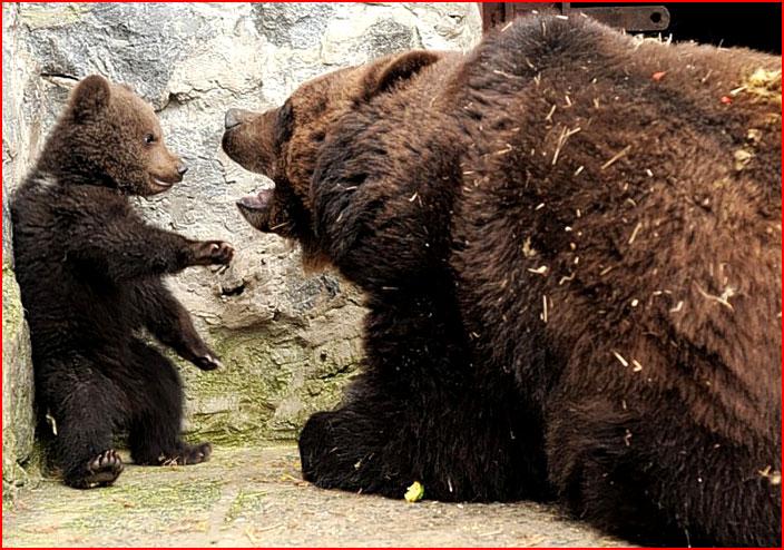 Воспитание по-медвежьи  (гей блюсик 7424)