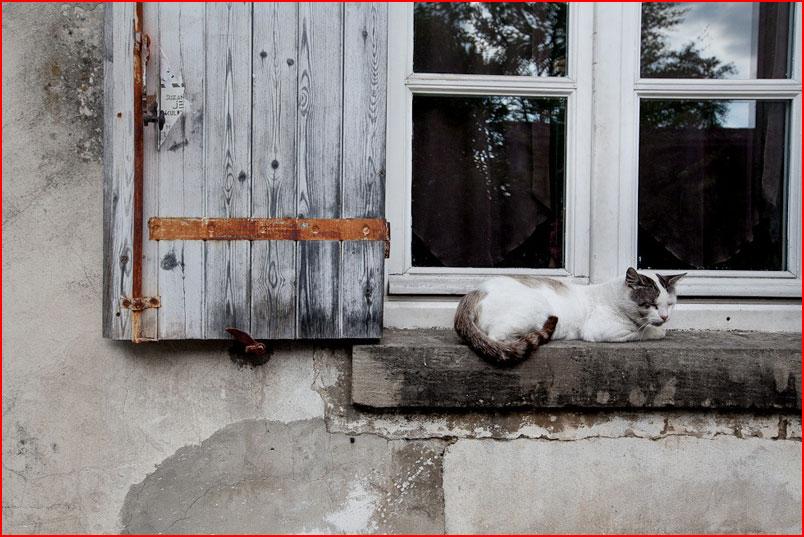 Путешествие по стране Басков  (гей блюсик 8139)