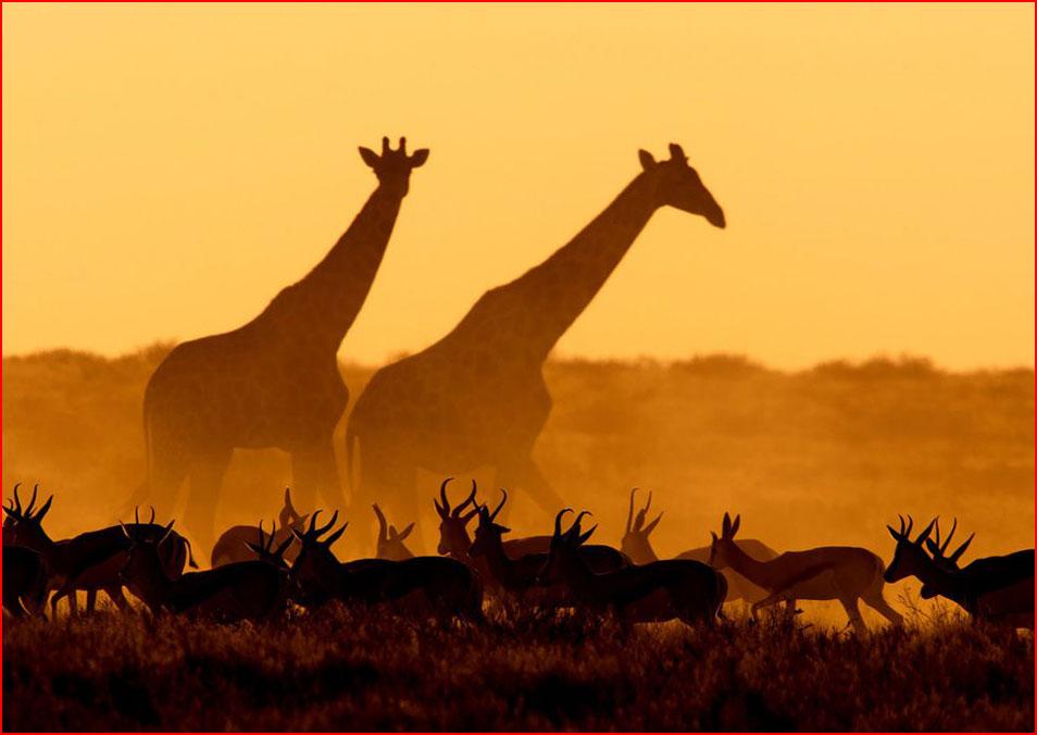 Животный мир в фотографиях от National Geographic  (гей блюсик 8756)