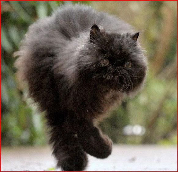 Непростая судьба кота-инвалида Кэффри (видео)  (гей блюсик 8809)